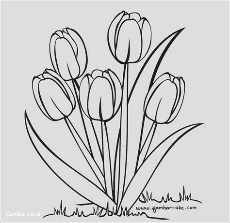 81 Gambar Sel Hewan Dan Tumbuhan Yang Mudah Digambar Terbaru