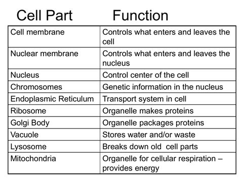 animal cell definition functions structure