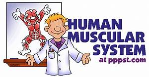 Free Powerpoint Presentations About Human Muscular System