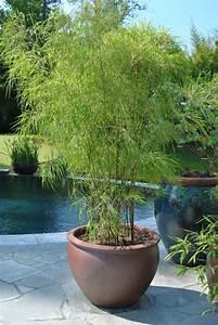 Arbuste Brise Vue : bambou en pot brise vue naturel et d co sur la terrasse ~ Preciouscoupons.com Idées de Décoration