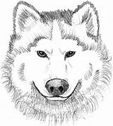 Wolf Coloring Printable Realistic Face Adults Colouring Head Animal Dog Clipart Theme Wolves Sheets Cartoon Moon Prints Exclusive Collector Mask sketch template