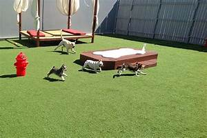 image gallery outdoor dog playground With dog day care las vegas