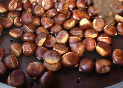 cooking chestnuts seasonal eating at the chestnut festival mulloon creek natural farms