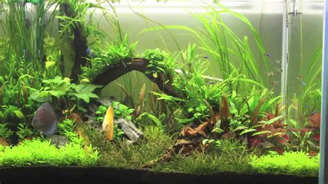 Aquascape, Discus Planted Tank, First Project From Start