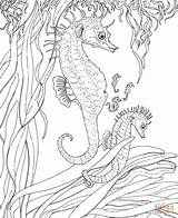 Coloring Seahorse Printable Sea Adult Adults Colouring Ocean Seahorses Animals Detailed sketch template