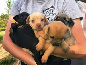 humane society rescues 55 dogs from hoarding situation
