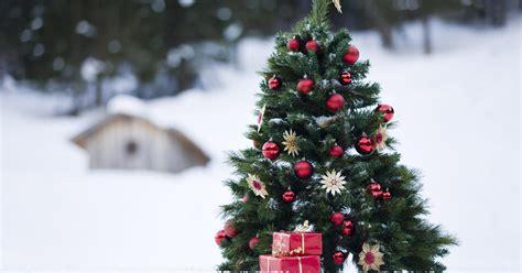 fakten rund um den christbaum mein schoener garten