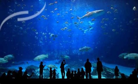 aquarium de vannes 224 30 min