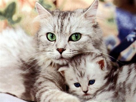beautiful cat pictures  stumbleupon