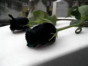 Black Roses - Gothic Photo (32884954) - Fanpop