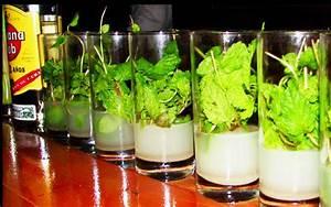 Service à Mojito : cuban bartenders discuss on new contributions to cuban cocktails ~ Teatrodelosmanantiales.com Idées de Décoration