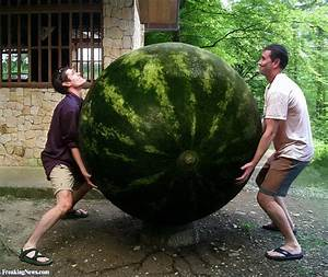 Playing with large melons  watermelonhunter