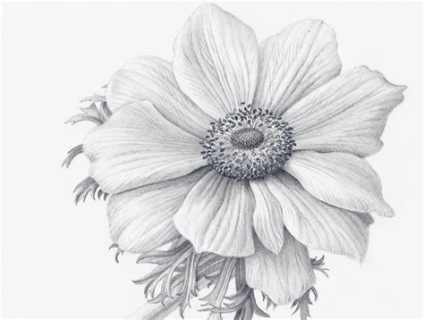 How To Draw Flowers Realistically Video Art Realistic