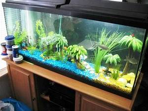 tall fish tank decoration ideas fish tank decoration With fish tank designs for home