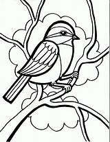 Coloring Bird Drawing Birds Pages Chickadee Sparrow Cute Draw Simple Drawings Little Seeds Print Line Eating Sparrows Printable Getdrawings Singing sketch template