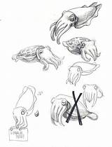 Cuttlefish Drawing Sketch Flamboyant Coloring Nautilus Drawings Sketches Cephalopods Fish Sketchite Tattoo Getdrawings sketch template