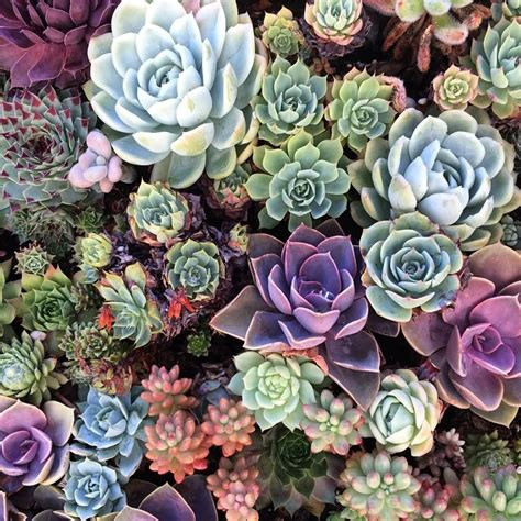 what are succulents how to grow successful succulents blue ridge chair