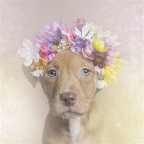 Dreamy Portraits of Flower Wreath Wearing Pit Bulls Challenge the Stereotypes Surrounding the Breed