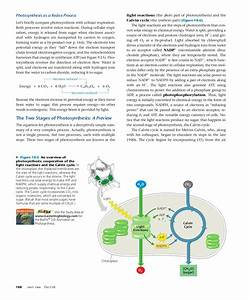 Bioflix Activity The Carbon Cycle Carbon Cycle Diagram