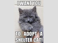 Upcoming Events — Adopt a Shelter Cat Month Half Price