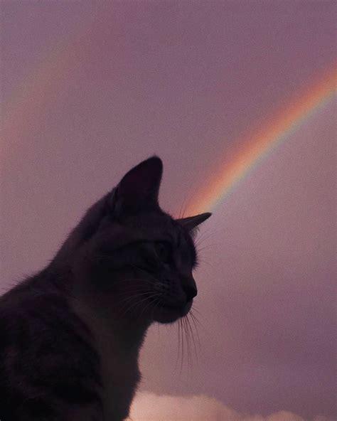 vi cat aesthetic cat wallpaper
