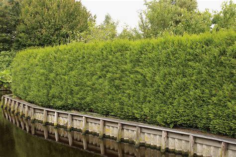 Die Hecke Natuerlicher Zaun Und Sichtschutz by Hecken Als Sichtschutz Was Gibt Es Zu Beachten Hecken