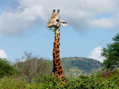 safari fotografie bilder  aus kenia