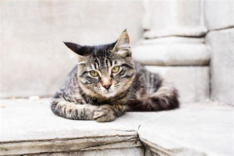 cats dogs than cat better why grey reasons istanbul