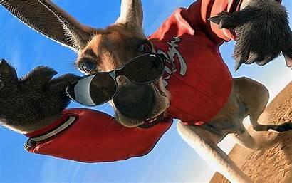 Jack Kangaroo Kangourou Sunglasses Wearing Funny Senscritique