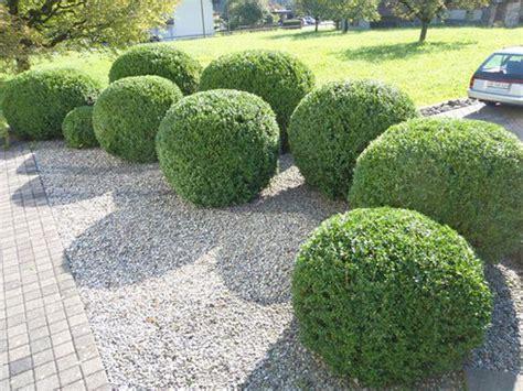 Hecke Schneiden Zeiten by Hecken Schneiden Garten Ideal Gmbh