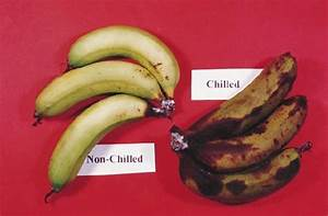 Physiological disorders in Banana – AgriHunt