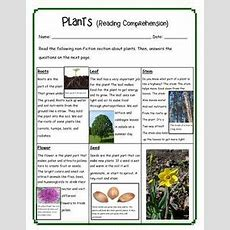 Plants Reading Comprehension  School  Reading Comprehension, Comprehension, Reading Passages