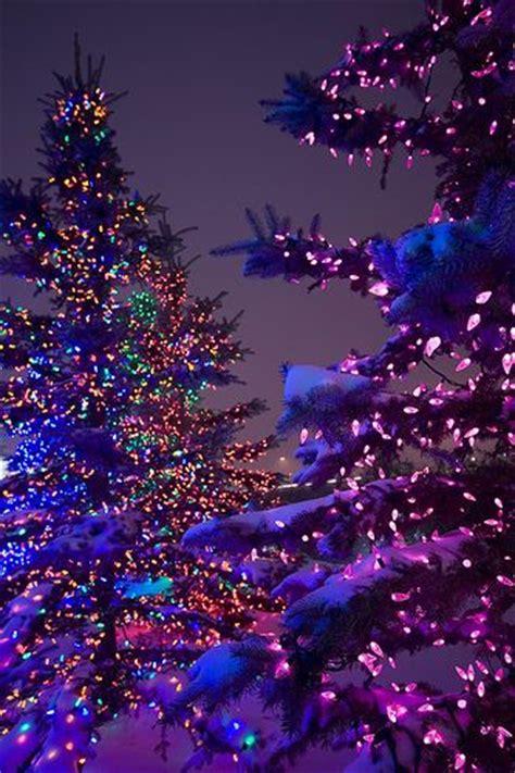 outside lighted trees so pretty christmas christmas