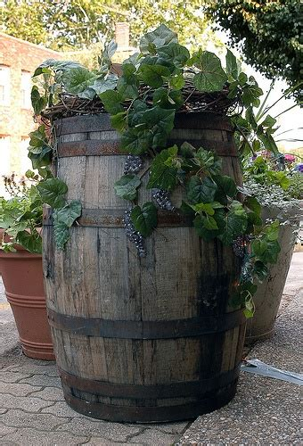 wine barrel planter ideas 1000 images about wine barrel ideas on