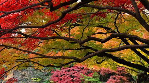 Autumnleaves Tokyo Bing Wallpaper Download