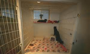 Cat Boarding Cages