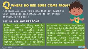 where do bed bugs come from answer me for kids mocomi With bed bugs why do they come