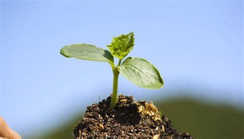 Garten Pflanzen Forum by Gurken Im Topf Pflanzen Gurken Im K Bel Pflanzen So
