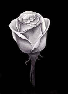 Black and White Charcoal Flower Drawings