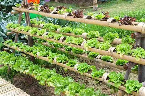 vertical hydroponics  basic introduction green