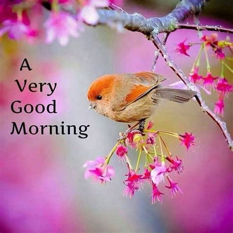 good morning friend pictures images  weneedfun