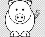 Pig Coloring Miniature Vietnamese Pot Face Cuteness Bellied Cool Cartoon sketch template