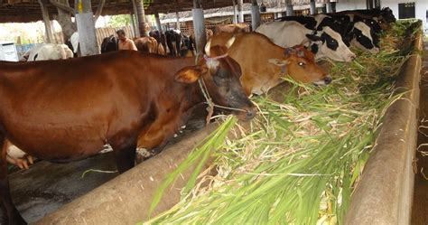 Reflection Of Indian Dairy Industry Dairy News India