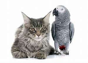Weißer Wurm Katze : bilder katze v gel papageien zwei tiere blick wei er hintergrund ~ Markanthonyermac.com Haus und Dekorationen