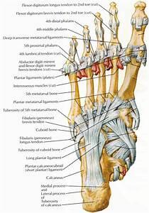 Foot Pain Diagram