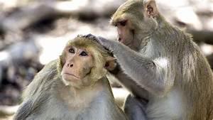 Monkeys Reveal New Clues Toward Elusive Hiv Vaccine And