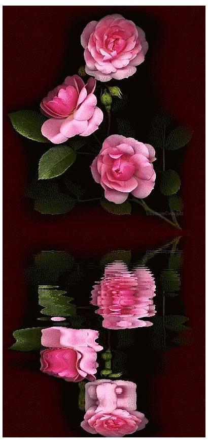 Roses Reflections Lovethispic