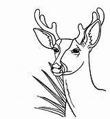 Deer Coloring Pages Enjoyable Leisure Totally Activity Antler Printable Bestappsforkids Getcolorings sketch template
