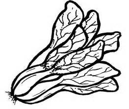 Lettuce clipart pechay - Pencil and in color lettuce ...