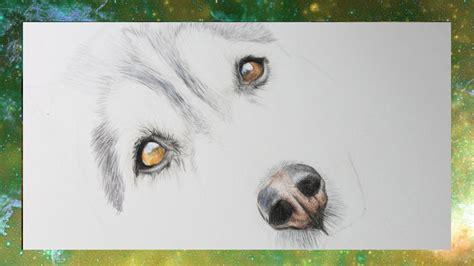tutorial hunde nase  semmys art youtube